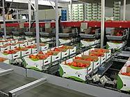Fruit ompakken 2.jpg