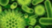 Virussen en bacterien.jpg
