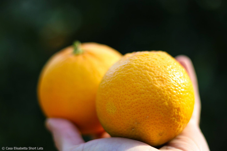 Eco orange juice
