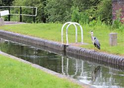 Dudley No 1 canal 9 Locks Delph Brierley