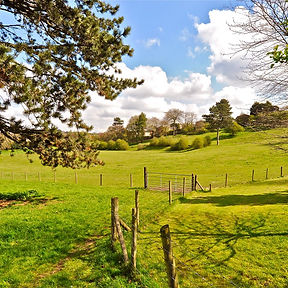 Corbett Meadow, Amblecote Mstr.jpg