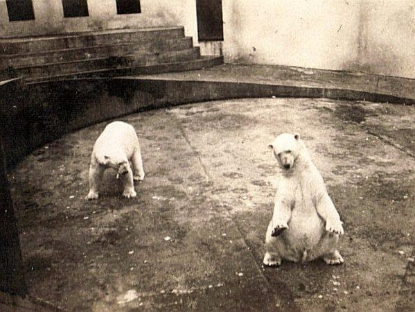 Dudley Zoo 1939 121