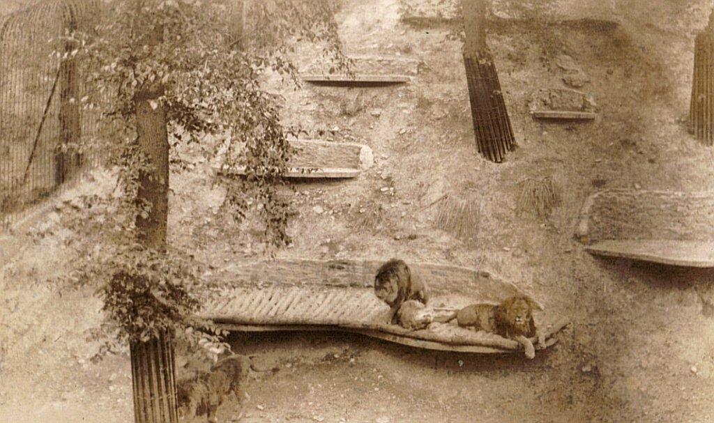 Dudley Zoo 1939 10