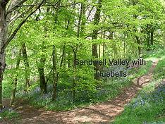 Sandwell Valley Bluebells in Sot's_edite