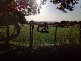 Horses in Sedgley