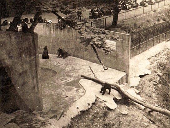 Dudley Zoo 1939 13