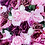 Thumbnail: Pass the Rosé