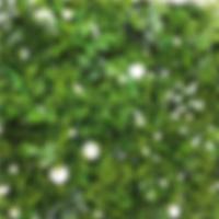 garden of eden 3.png