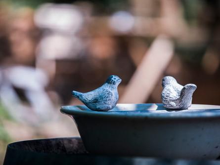 wasserbad für unsere vögel