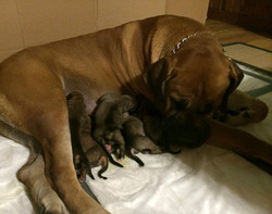 Nyla with her Tiger babies