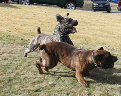 Tank and Tiger playing