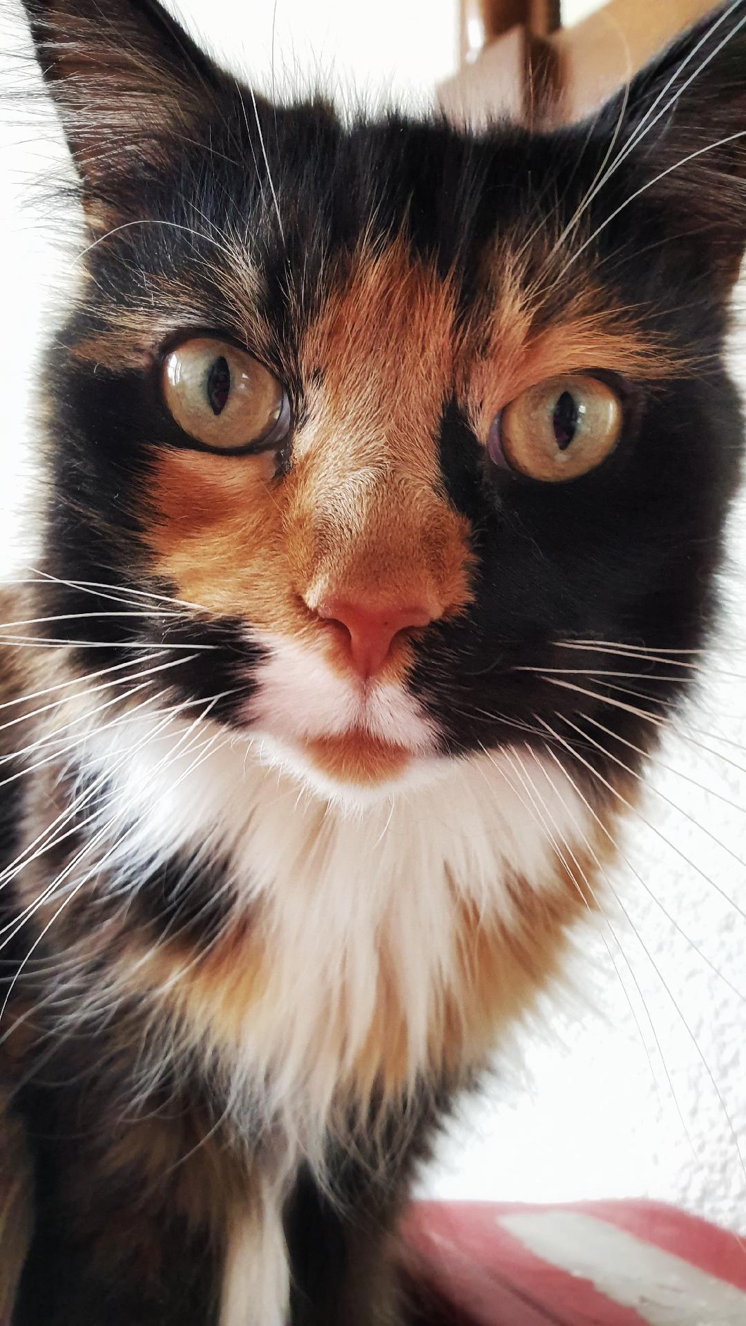 kattenoppasamersfoort