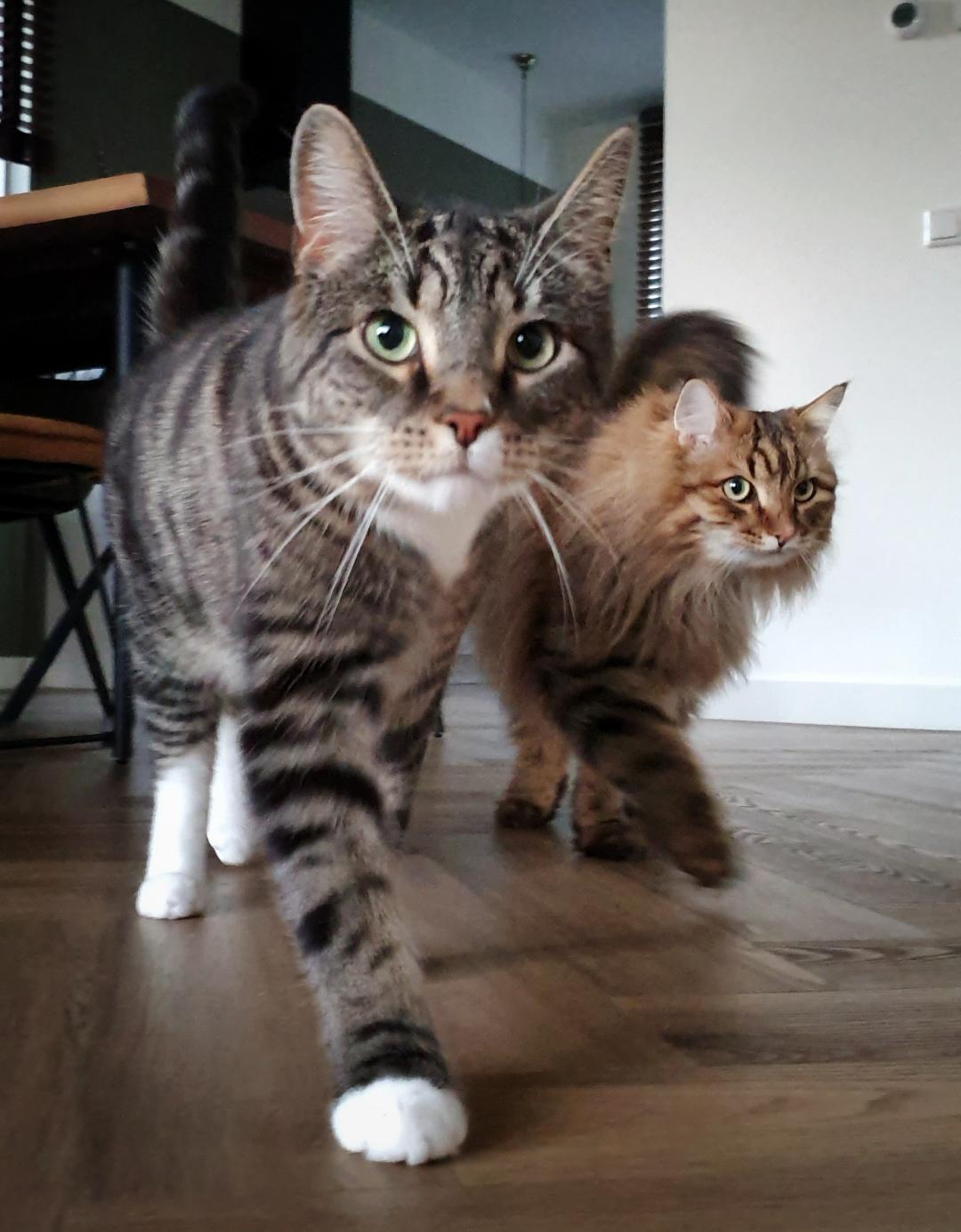 kattenoppasinamersfoort