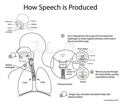 How Speech is Produced