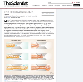 The Scientist June 2021: Fungi Squeezed Through Microchannels Offer Clues to Cell Growth