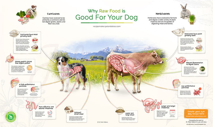 Why Raw Food is Good For Your Dog