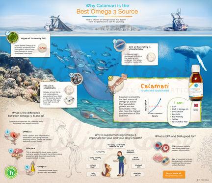 Why Calamari is the Best Omega-3 Source