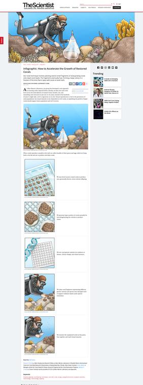 The Microfragmentation Process