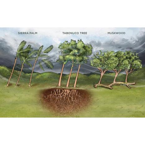 Tropical Trees Bend, Not Break