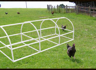 Build Your Own Portable Chicken Coop