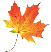 Leaf (Transparent).png