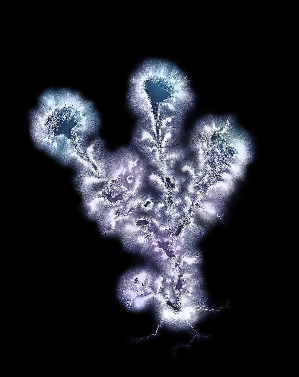 A Kirlian photograph of a flower.