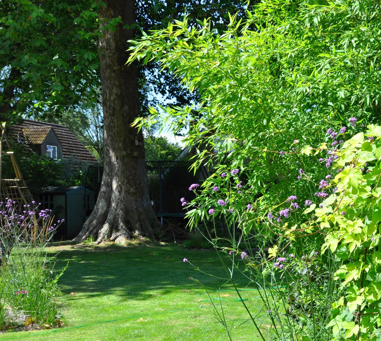 wildlife garden, Marlow
