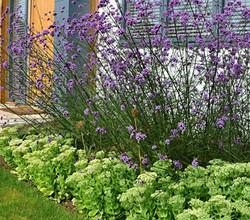 contemporary front garden, Marlow