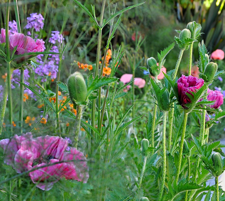 planting design, Marlow