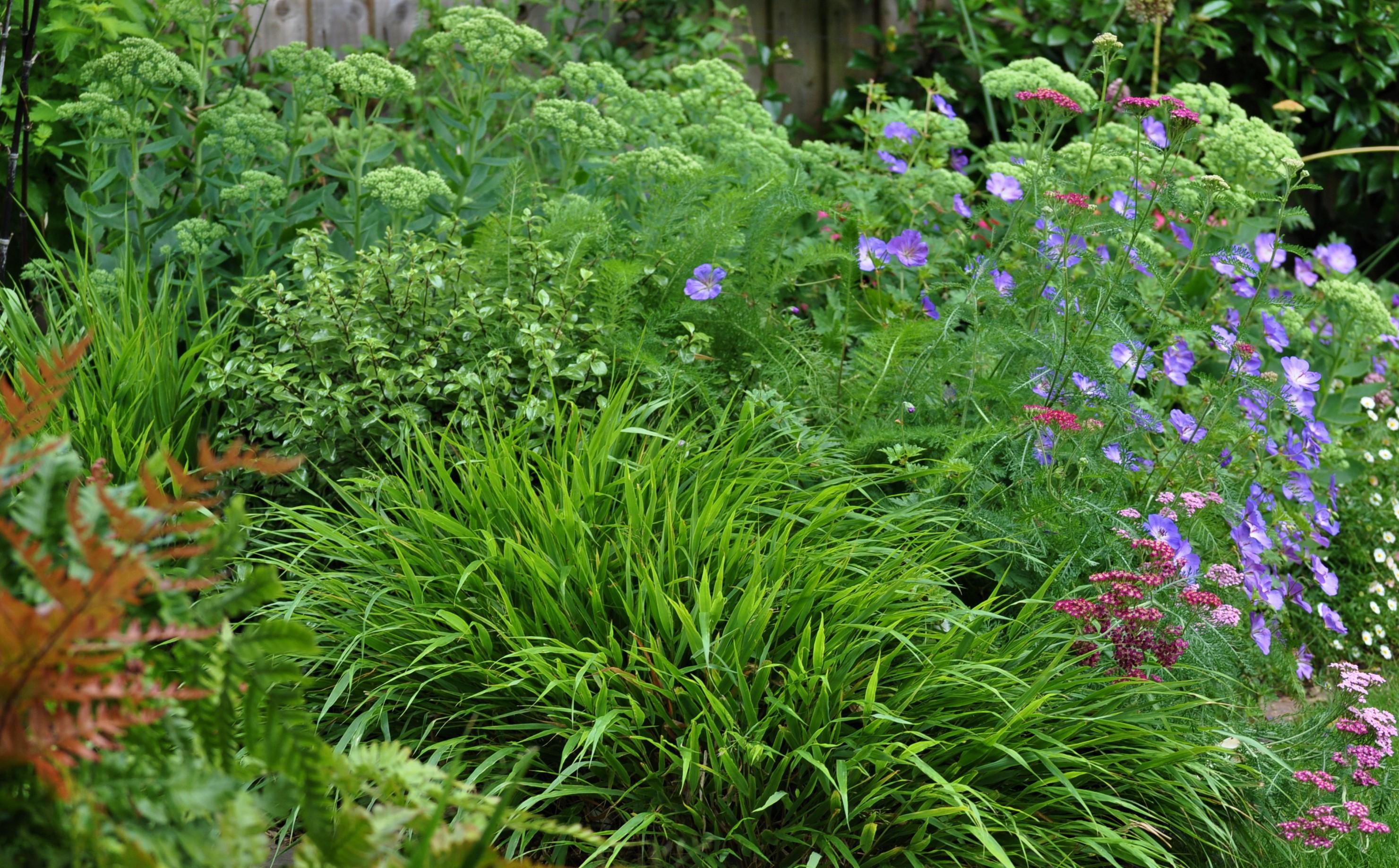 relaxing urban garden, Marlow