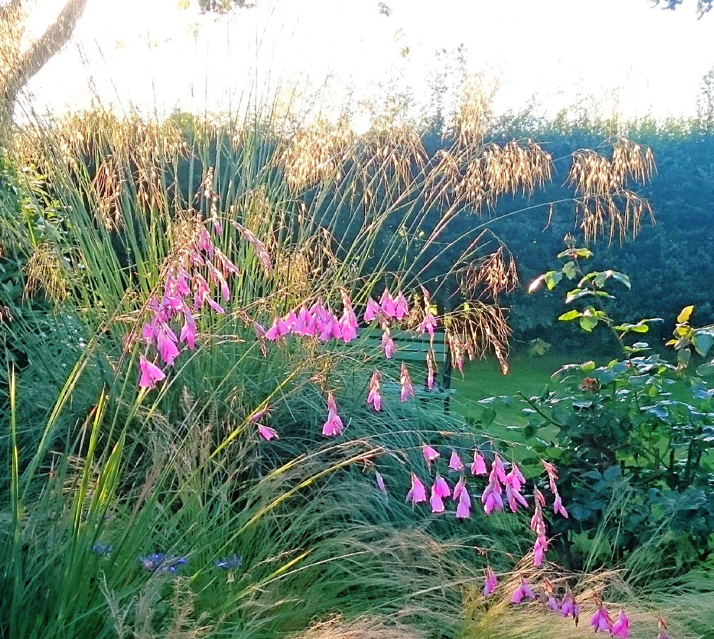 planting design, Maidenhead