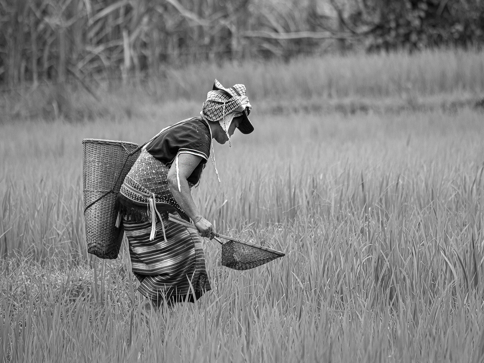 PDI - Working In The Fields by Julie Dickson (9 marks)