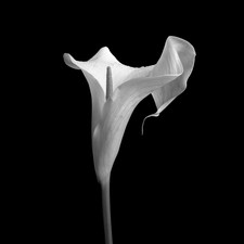 MONO: 'Lily' by Brian McCaw - Dungannon - Cookstown Camera Club