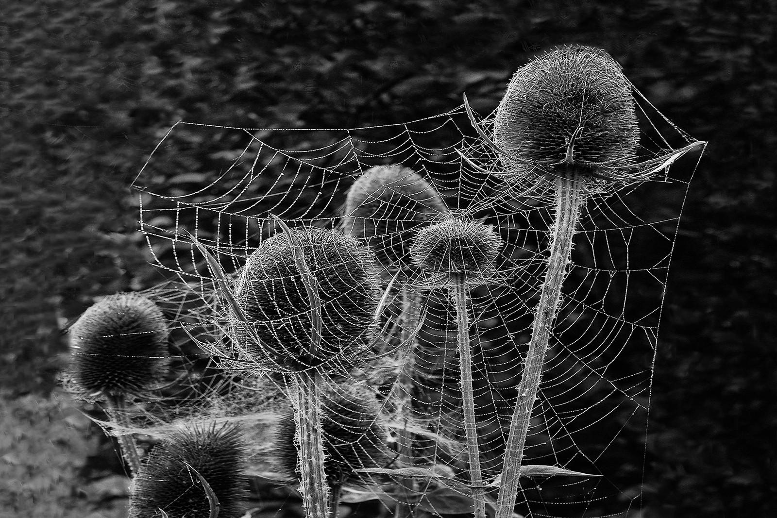 MONO - Tassel with Web  by Dympna Heagney  (8 marks)