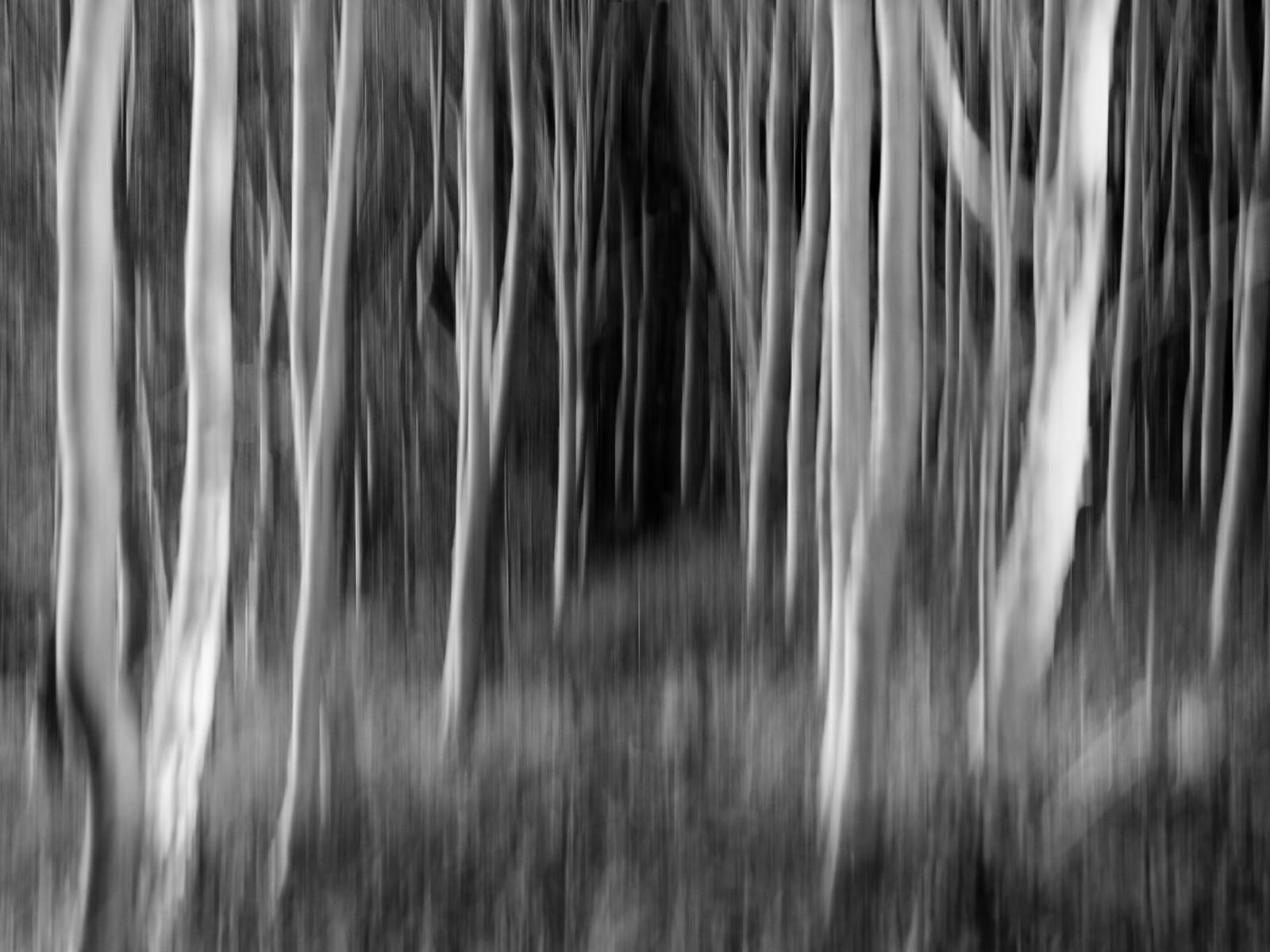'Spooky Wood' by Brian McCaw (10 marks)