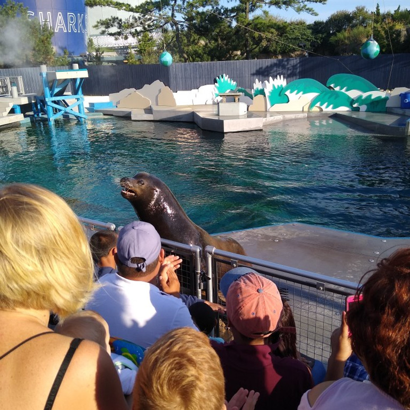 Sea lion barking at crowd next to fence