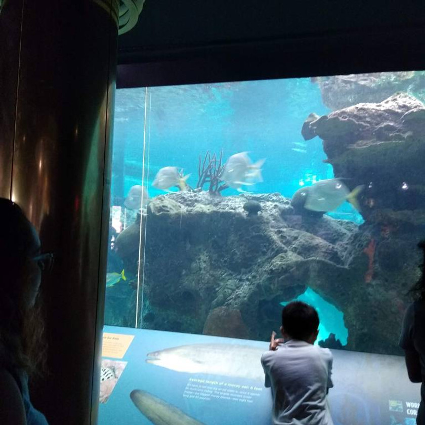 child leaning on information board to look into large aquarium window