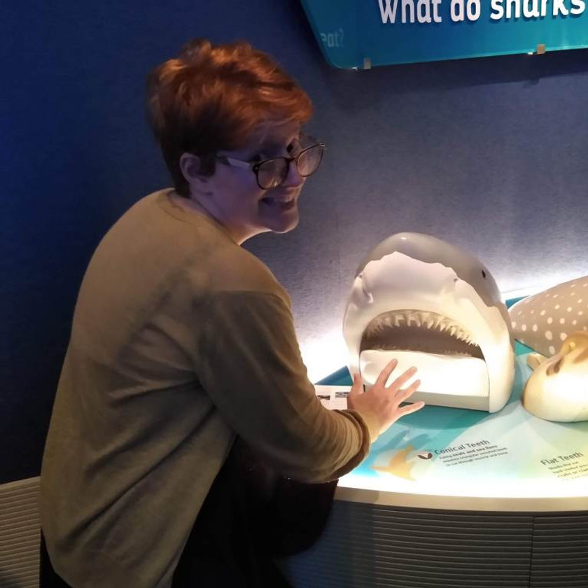Touch-able shark mouth display