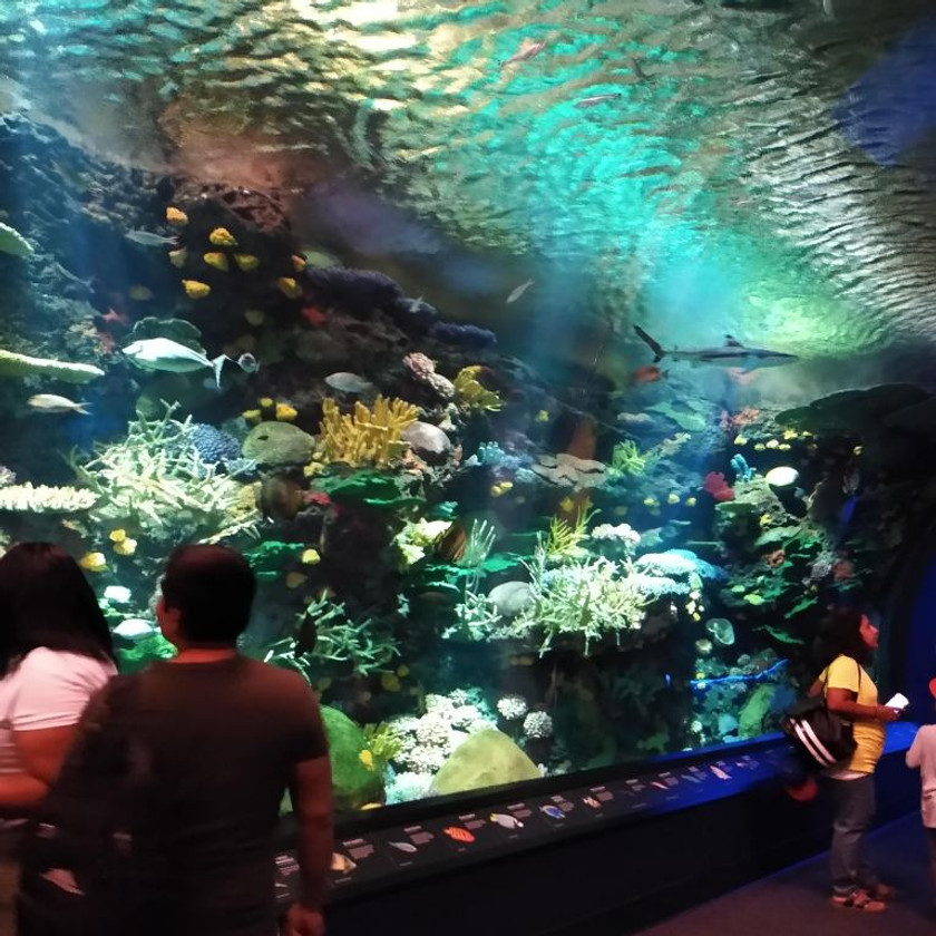 People inside tunnel aquarium with sharks, coral, and small fish