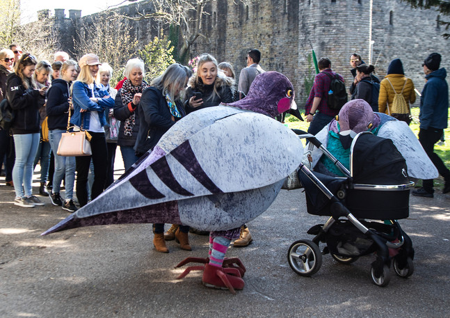 bristol coddywomple the pigeons.jpg