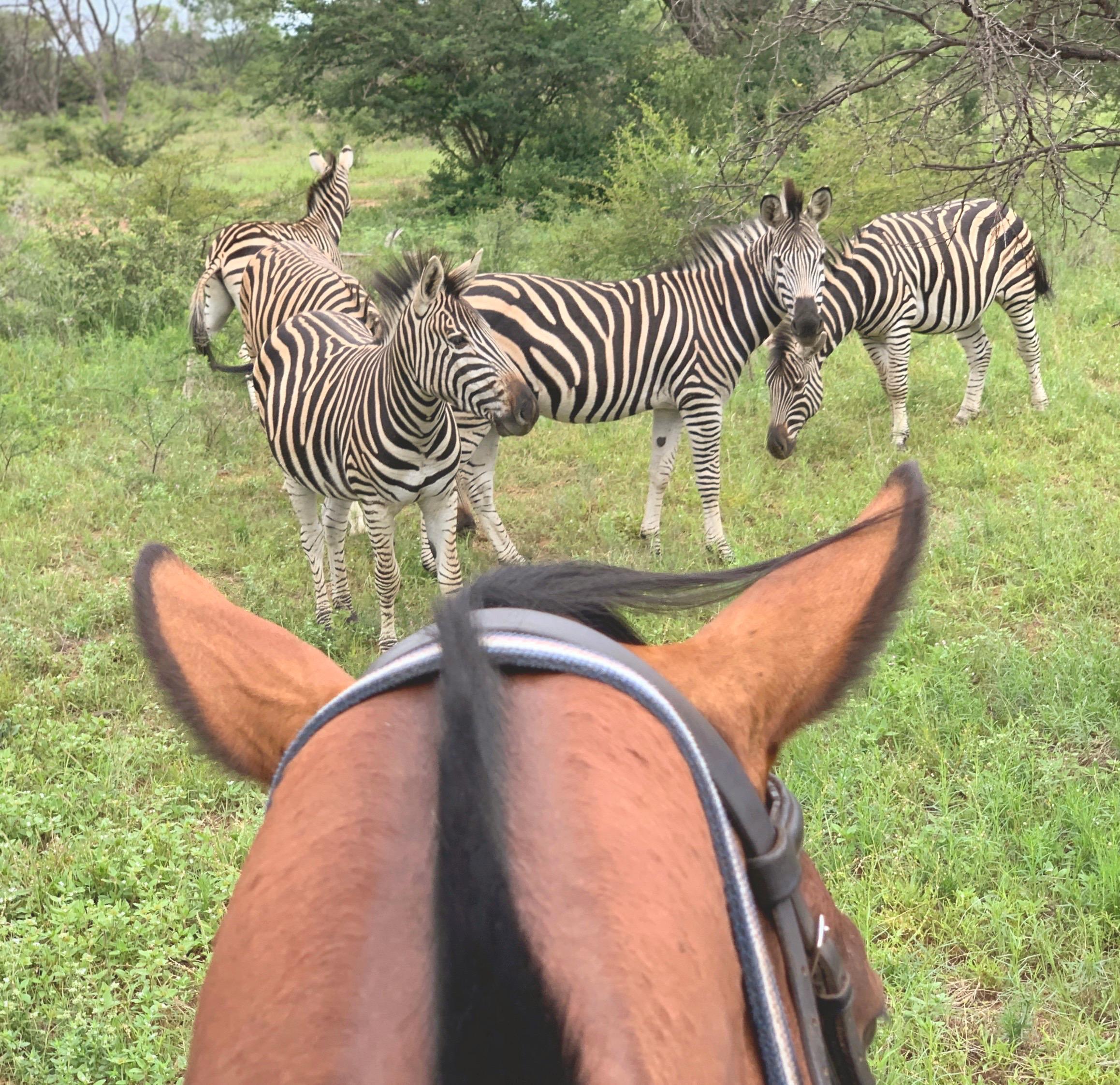Riding with Zebras