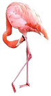 06_Flamingo_edited.png