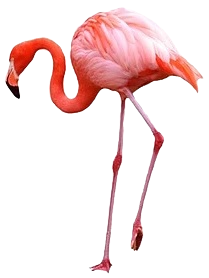 05_Flamingo_edited.png