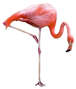 02_Flamingo_edited_edited.png