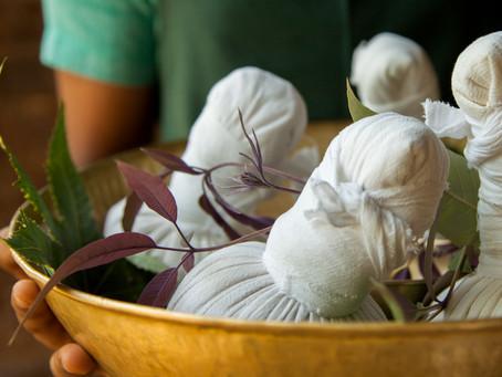 RASAYANA : la régénération grâce aux cures ayurvédiques            au Kerala.