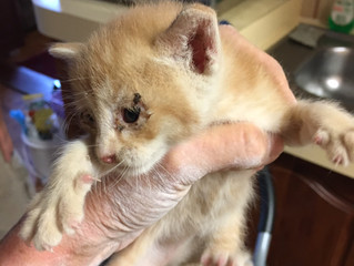 Kitten rescued from an internal house wall after 3 days