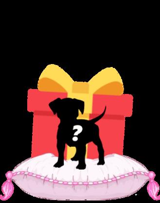 puppybordercolli.png