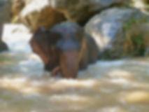 Ele in river.jpg