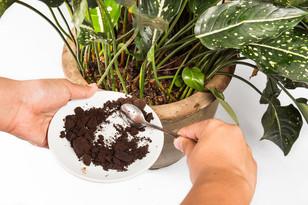 8 astuces pour réutiliser le marc de votre café