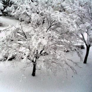 Winter (12 oz.)